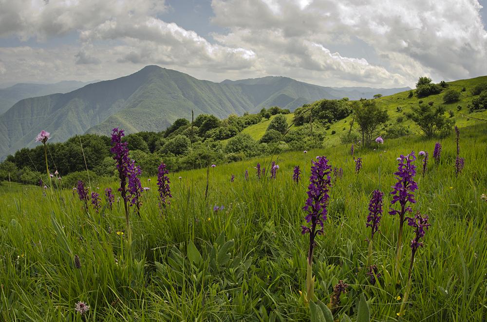 Orchid landscape