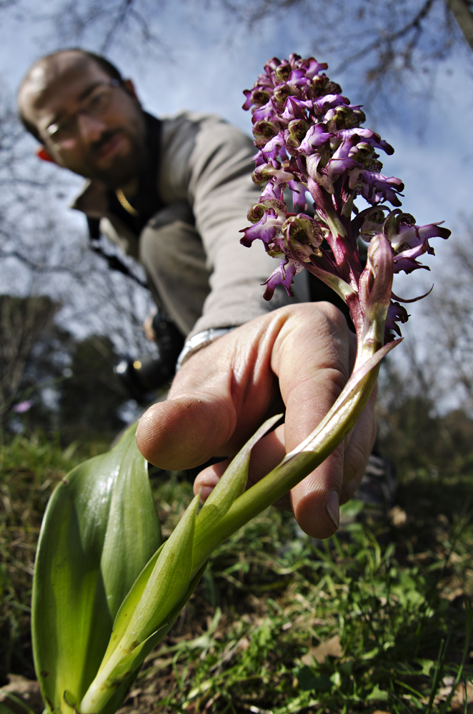 Don't pick up wild orchids!